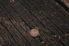Clavo oxidado en piso de madera decaído viejo Fondo Macro Fotos de archivo