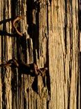 Clavos aherrumbrados en la cerca Post Vertical fotografía de archivo