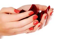 Clavos femeninos hermosos del finger con el primer rojo del clavo en los pétalos P fotos de archivo