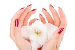 Clavos y dedos hermosos Foto de archivo