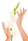 Clavos y dedos hermosos Foto de archivo libre de regalías