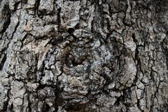 Claw bark texture show black-brown rough texture and eyeball from gnarly tree. Claw bark texture show black-brown rough texture and eyeball from old gnarly tree Royalty Free Stock Photography