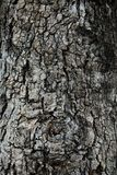 Claw bark texture show black-brown rough texture and eyeball from gnarly tree. Claw bark texture show black-brown rough texture and eyeball from old gnarly tree Royalty Free Stock Image