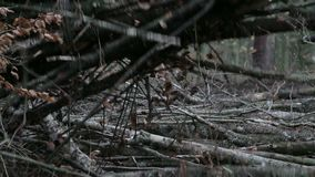 Claw on forestry grinder picking up branches. Close up on claw on forestry grinder picking up branches stock video