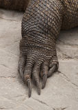 Claw of a Komodo Dragon. Close up of the scaled claw of a komodo dragon stock photo