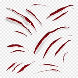 Claw scratches vector illustration. Of realistic red wild animal scratching with torn white texture on transparent background royalty free illustration