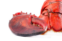 Claw and tail of lobster Royalty Free Stock Image