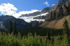 Clawfoot Glacier and Meadow. Meadow and glacial lake with Clawfoot Glacier in the background off the Icefield Parkway, Banff National Park, Canada Stock Photography