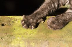 Claws. A cat stretches it's claws in a sunny spot Royalty Free Stock Image