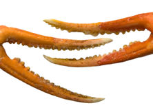 Claws Royalty Free Stock Photos