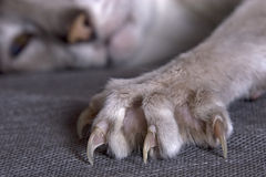 Claws Royalty Free Stock Images