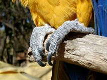 Claws Royalty Free Stock Photography