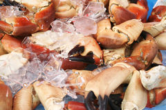 Claws of the crab Stock Images