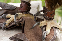 Claws of an eagle. Sitting on skin with ornaments standing Royalty Free Stock Image