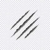 Claws scratches. Vector illustration. royalty free illustration