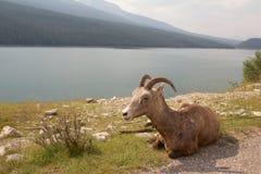Claxon grande en el lago Imagen de archivo libre de regalías