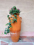 Clay amphora with green flowering ivy Royalty Free Stock Images