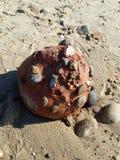 Clay Ball vermelho Fotografia de Stock Royalty Free