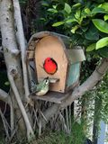 Clay birds setting on the bird house. royalty free stock photography