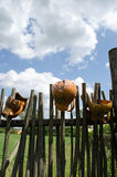Clay broken pitchers hang wooden rural woven fence Royalty Free Stock Image