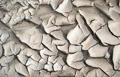 Clay crack. In the rice field Stock Image