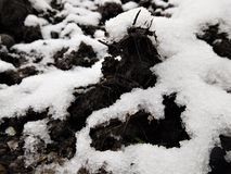 The clay and dung under first snow Stock Photos