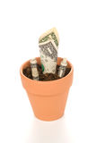 Clay flower pot with cash growing Royalty Free Stock Photos