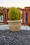 Clay flower pot with plant in it, old style design.  royalty free stock photo