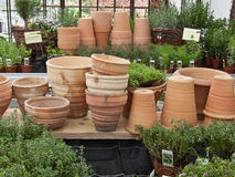 Clay Flower Pots 2. Clay Flower Pots encircled by herbs in garden centre ready for sale Stock Photo