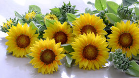 Clay flower, sunflower bouquet Royalty Free Stock Images