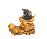 Clay flowerpot with a kitten Royalty Free Stock Photography