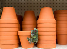 Clay Flowerpots and Frog on shelf Royalty Free Stock Image