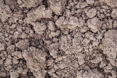 Clay garden soil Stock Images