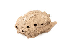 Clay hive of Sphecidae on white background Stock Image