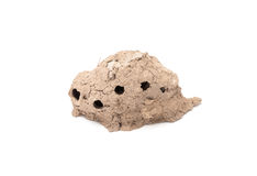Clay hive of Sphecidae on white background Royalty Free Stock Images