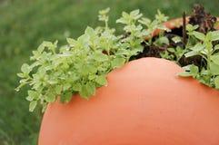 Clay Jar Royalty Free Stock Image