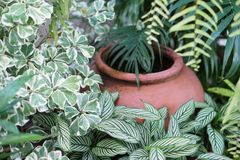 Clay jar in the garden plants leaf Royalty Free Stock Photography