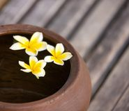 Clay jug with flower plumeria or frangipani decorated on water. Bowl in zen style for spa meditation mood royalty free stock images