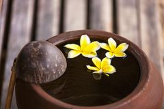Clay jug with flower plumeria or frangipani decorated on water. Bowl in zen style for spa meditation mood royalty free stock photos