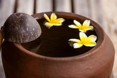 Clay jug with flower plumeria or frangipani decorated on water. Bowl in zen style for spa meditation mood stock images