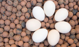 Clay Pebbles with eggs Royalty Free Stock Photos