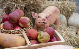 Clay pig on hay with apples, composition stock photo