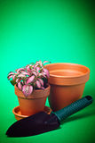 Clay plant pots Royalty Free Stock Photography
