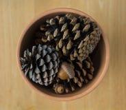Clay Pot di Pinecones e ghiande su fondo di legno Immagine Stock Libera da Diritti