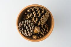 Clay Pot di Pinecones sulla vista superiore del fondo bianco Fotografia Stock