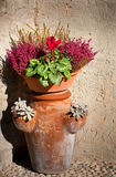 Clay pot with flowers Royalty Free Stock Image
