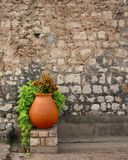 Clay pot with flowers. From a garden in Cannes, France Royalty Free Stock Image