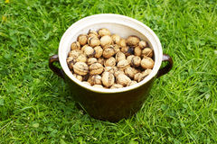 Clay pot full of walnuts. Lying on grass Royalty Free Stock Image