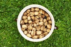 Clay pot full of walnuts. Lying on grass Royalty Free Stock Photos