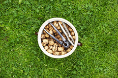 Clay pot full of walnuts. Lying on grass Stock Photography